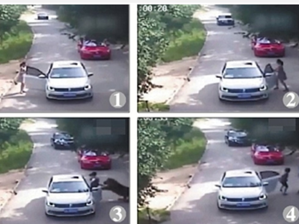 女子动物园遭虎袭 母亲施救被咬死