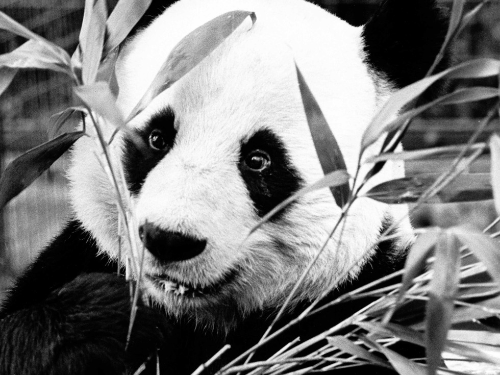 盘点中国熊猫外交史[图集]
